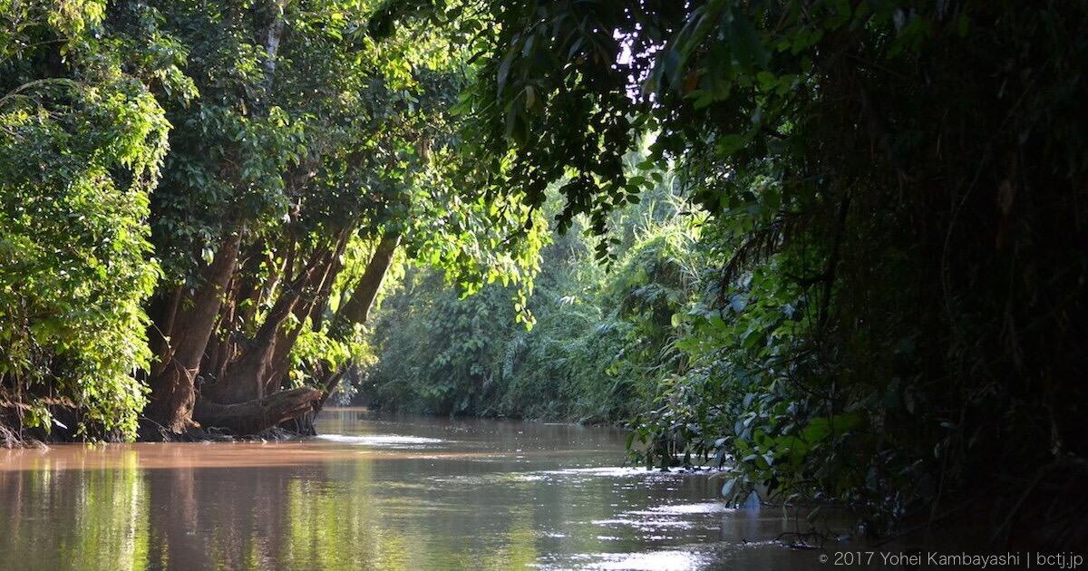 キナバタンガン川支流の美しい風景