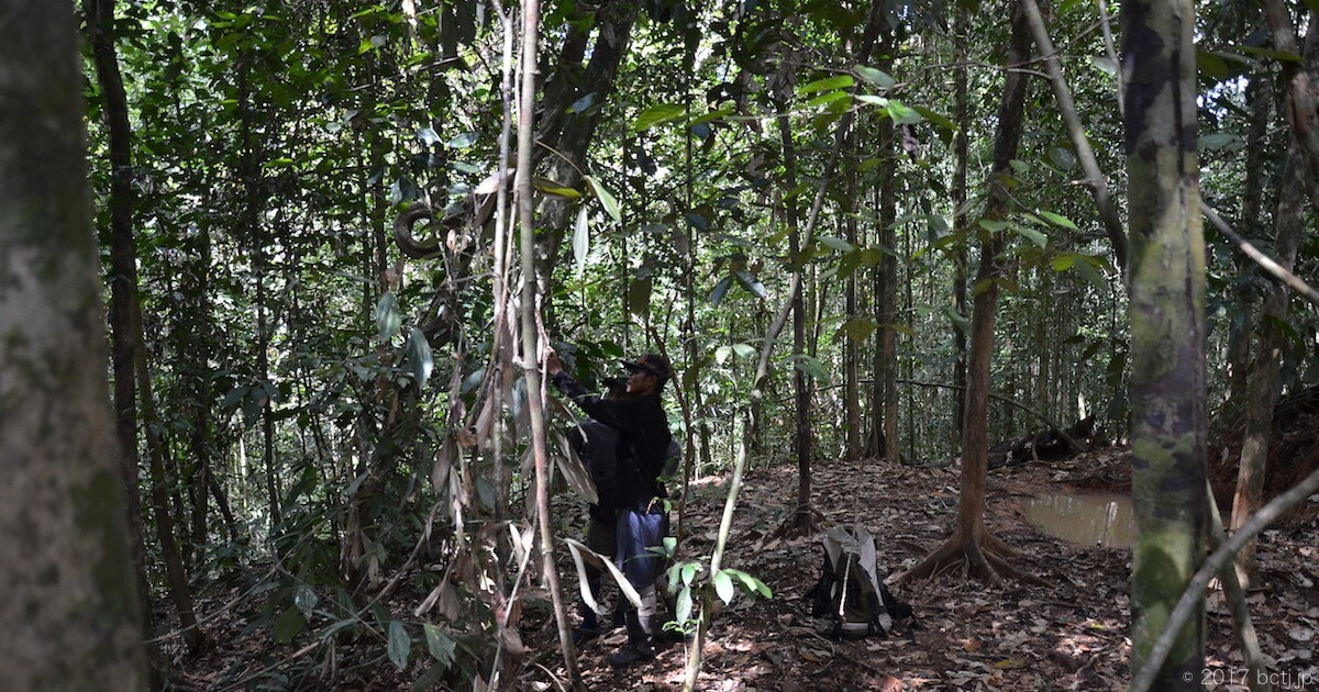 熱帯雨林の中に自動撮影カメラを仕掛ける