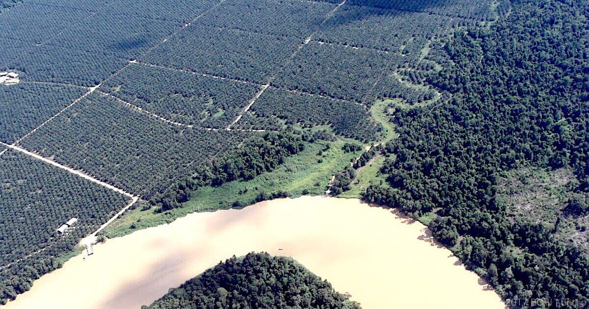 キナバタンガン川流域に広がるプランテーション