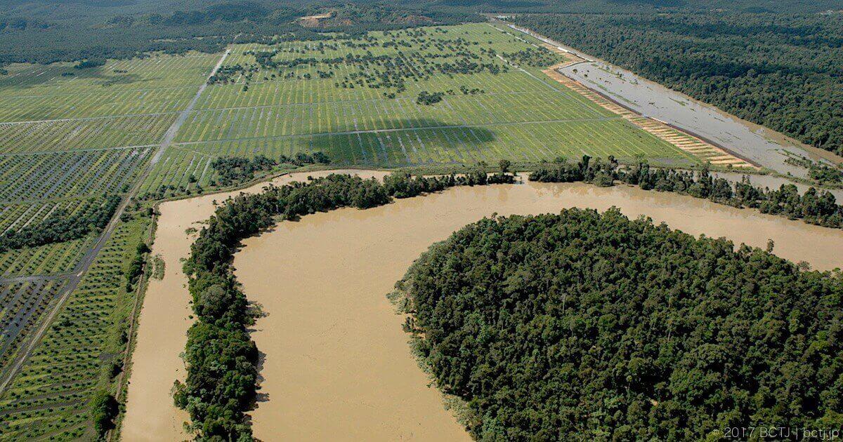 キナバタンガン川流域に広がるアブラヤシプランテーション