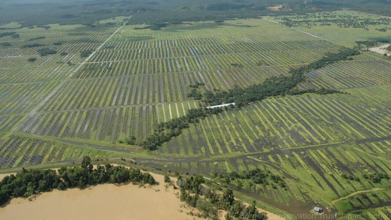 河岸ギリギリまで開発されたキナバタンガン川流域