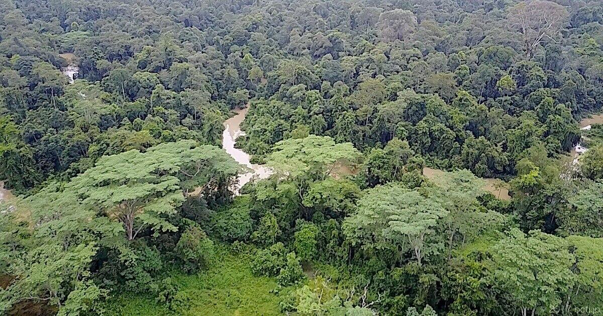 美しいボルネオの熱帯雨林